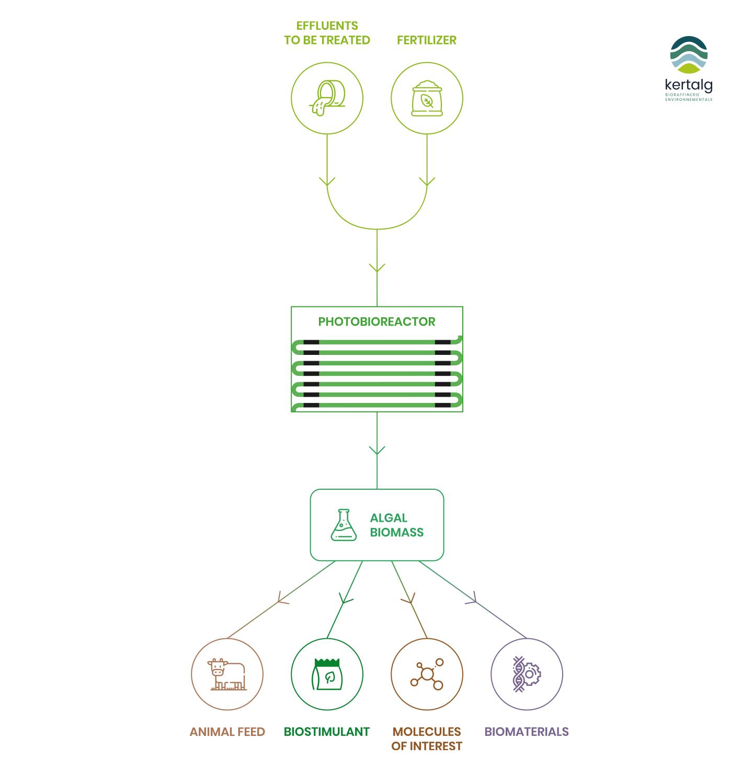 kertalg-schema-photobioreactor